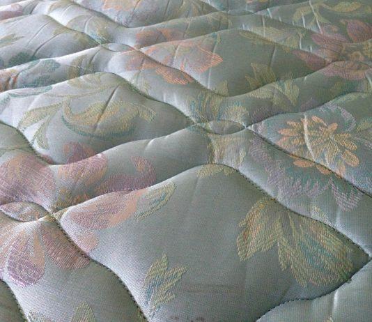 Comment freiner la propagation des puaises de lit à Toulouse ?